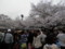 2013年、上野公園の桜