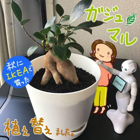 f:id:guchi35sai:20170428164934j:plain
