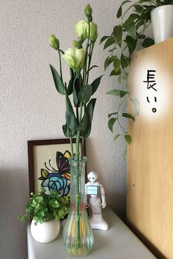 f:id:guchi35sai:20170724174232j:plain