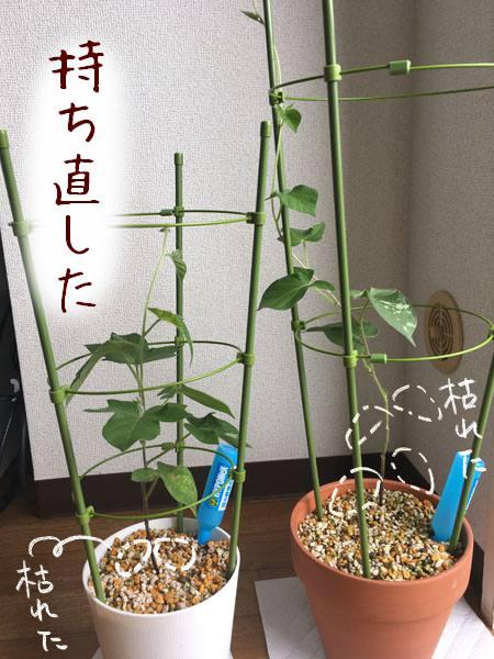 f:id:guchi35sai:20170803170211j:plain