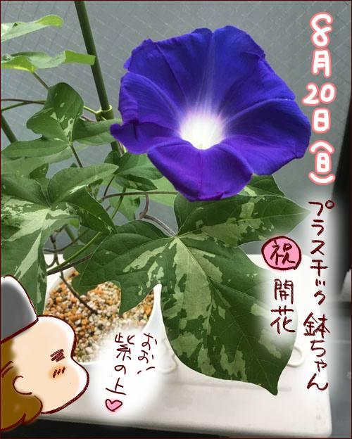 f:id:guchi35sai:20170826101950j:plain