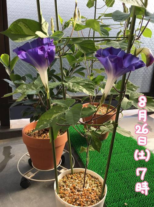 f:id:guchi35sai:20170826102804j:plain