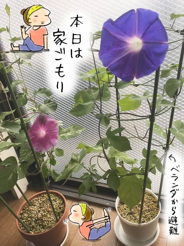 f:id:guchi35sai:20170917141950j:plain