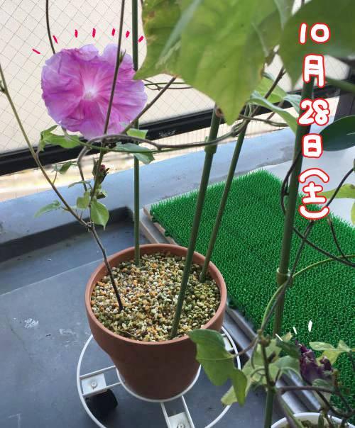f:id:guchi35sai:20171028101710j:plain