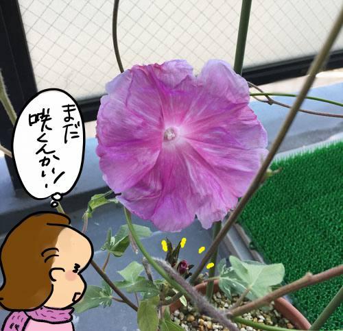 f:id:guchi35sai:20171028103436j:plain