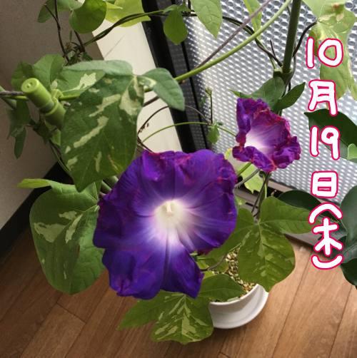 f:id:guchi35sai:20171028103455j:plain