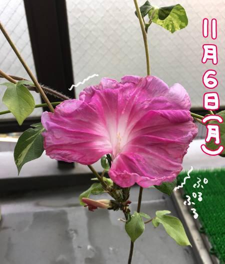 f:id:guchi35sai:20171111123445j:plain