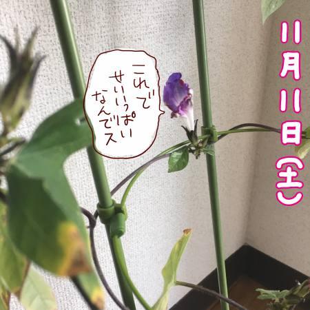 f:id:guchi35sai:20171111125201j:plain