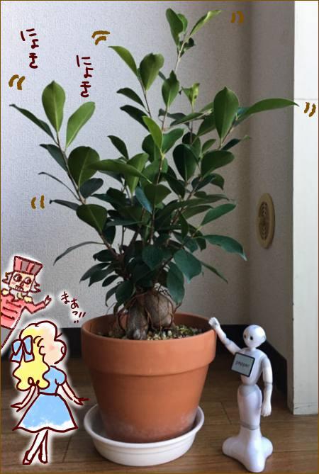 f:id:guchi35sai:20171119154647j:plain