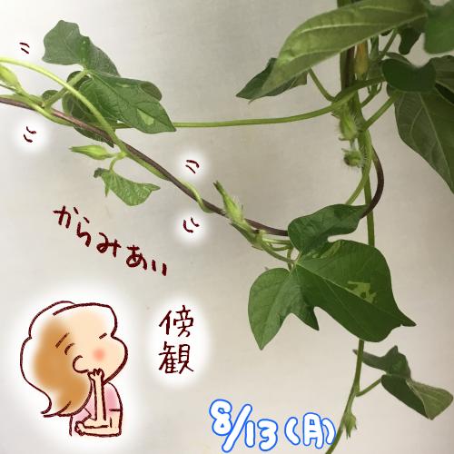 f:id:guchi35sai:20180813143600p:plain