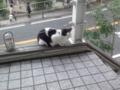 横浜谷戸坂のねこ