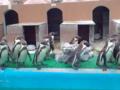 犬吠埼マリンパークのペンギン
