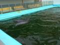 犬吠埼マリンパークのイルカ