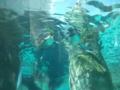 旭山動物園・ペンギン館水中トンネル