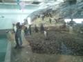 旭山動物園・ペンギン館