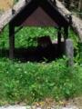 旭山動物園・レッサーパンダ