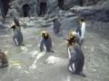 旭山動物園・ペンギン