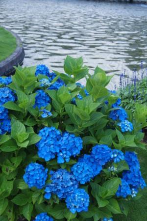 f:id:guranomainichi:20120717165057j:image