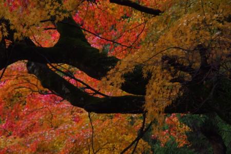 f:id:guranomainichi:20141129135908j:image:left