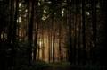 Twilight by ijmm