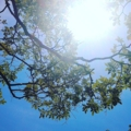 若葉と太陽