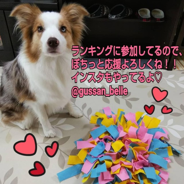 f:id:gussan-belle:20200209203202j:image