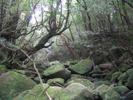 白谷雲水峡