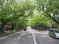 [宮崎]宮崎県庁前  くす並木