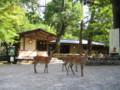 [奈良]春日大社 鹿
