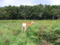 [斜里町]斜里町にて 鹿