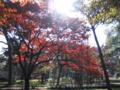[紅葉]京都御所