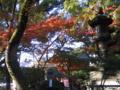 [紅葉]八坂神社