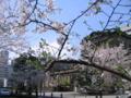 [日本橋][さくら]本石町日銀本店前