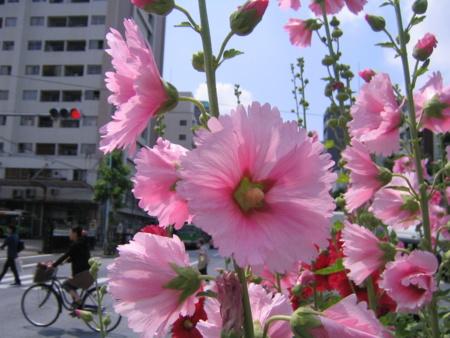 早稲田にて たちあおい