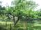 小石川 ニュートンのリンゴの木