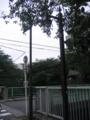 [ブラタモリ]早稲田の街灯