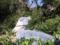 上野動物園のハシビロコウ