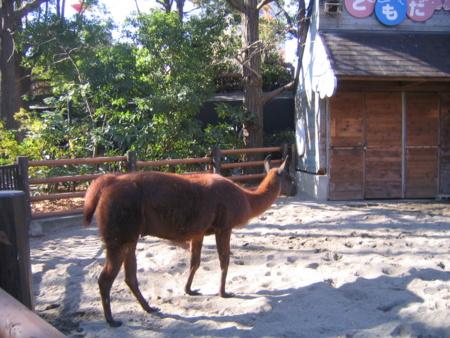 上野動物園西園