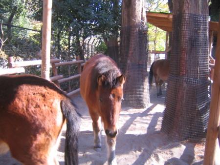 上野動物園の日本在来場