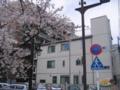早稲田(神田川べり)