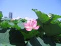 [台東区]不忍池