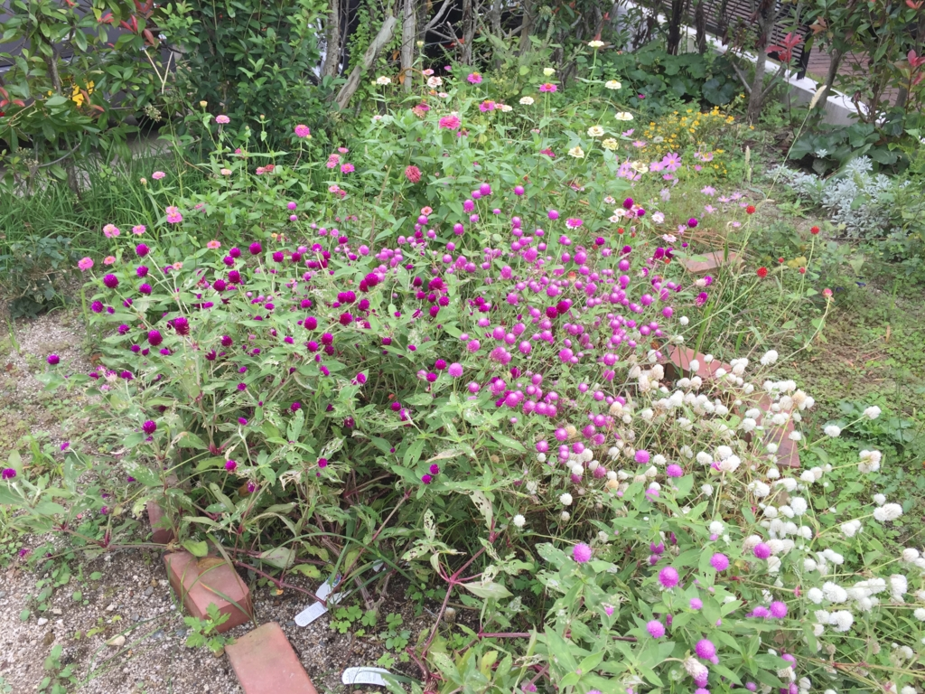 f:id:gutar_gardening:20161020111942j:plain