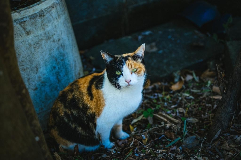 保護猫・野良猫のイメージ