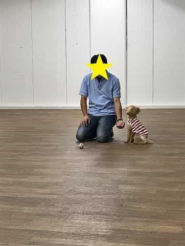 犬トレーニング中