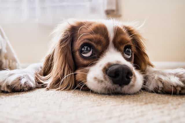 犬のトイレシート