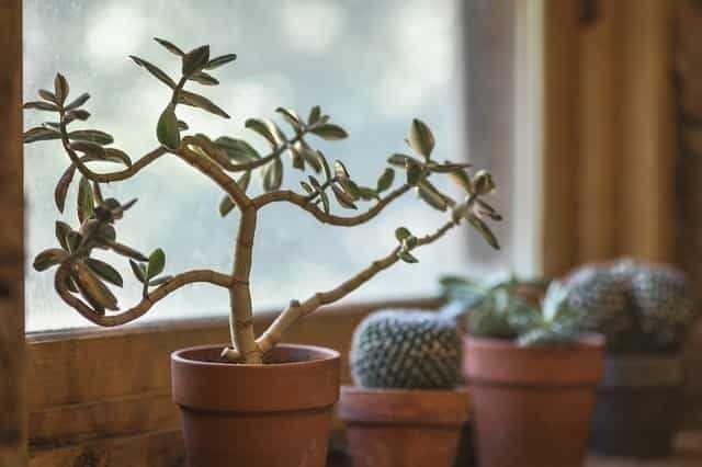 わが家の観葉植物たち