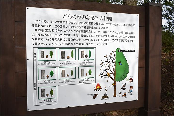 f:id:gyamako:20190516124343j:plain