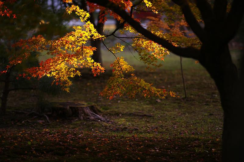 f:id:gyaos55:20121125162518j:image
