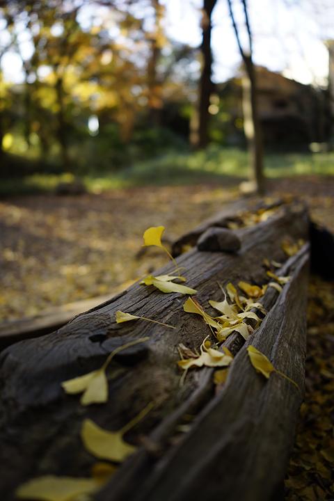 f:id:gyaos55:20121209151723j:image