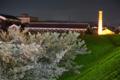 『京都新聞写真コンテスト 夜桜が盛立てる酒蔵』